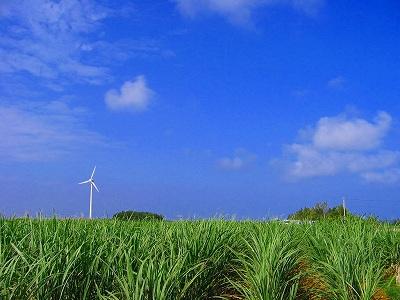 Wind_plant_3